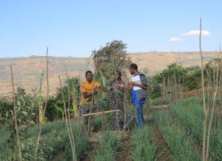 """""""Hilfe zur Selbsthilfe"""" kommt an und wirkt langfristig: Mit Unterstützung der äthiopischen Mitarbeiter lernen die Bauern in den Projektregionen von Menschen für Menschen beispielsweise bessere Anbau- und Bewässerungstechniken kennen. (Bildquelle: Menschen für Menschen / Terhas Berhe)"""