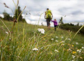 Wanderbegeisterte freuen sich jedes Jahr auf eine ausgiebige Kräuter- und Blumenwanderung auf der Raxalpe. (Bildquelle: Arthur Michalek)