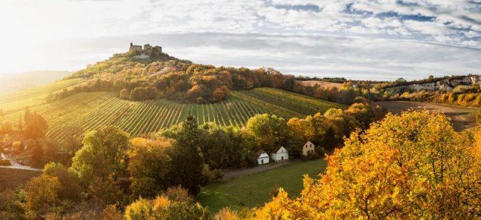 Der 22. Weinherbst Niederösterreich (Bildquelle: Niederösterreich-Werbung / Michael Liebert)