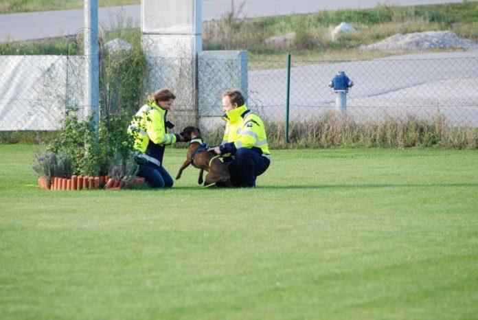Zu jeder Tages-, Nacht- und Jahreszeit sind die ehrenamtlichen Mitglieder mit ihren Hunden bereit, sich sofort auf den Weg zum Einsatzort zu begeben. (Bildquelle: Rettungshunde NÖ)
