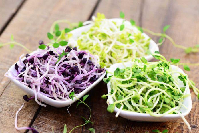 Das frische Grün ist nicht nur hübsch anzusehen, sondern auch vielseitig verwendbar und bringt Abwechslung in die winterliche Küche (Bildquelle: fotolia)