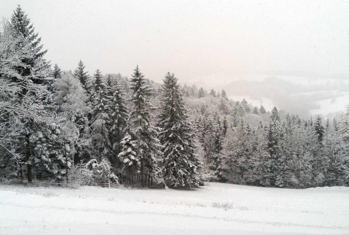 Neuschnee in allen Teilen Niederösterreichs erwartet (Bildquelle: Michaela Resch)