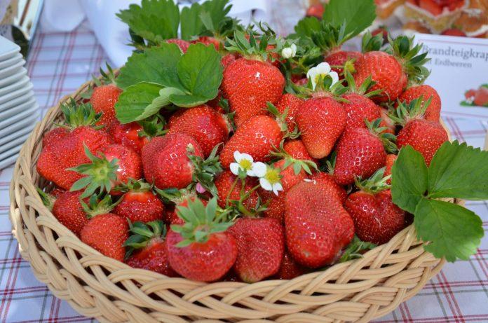 Ab sofort gibt es die schmackhaften Erdbeeren von Oberösterreichs Erdbeerfeldern (Bildquelle: LK OÖ)