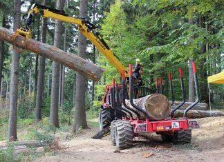 Der Holzmarkt steht aufgrund des prognostizierten Klimawandels vor großen Herausforderungen (Bildquelle: LK OÖ)