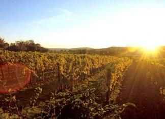 Herbstlicher Weingarten in Wien (Bildquelle: ÖWM / Armin Faber)