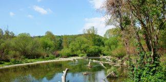 Die Pielach ist Heimat von gefährdeten Arten wie Würfelnatter, Flussuferläufer, Huchen und der vom Aussterben bedrohten Bachmuschel (Bildquelle: Katrin Kraus)