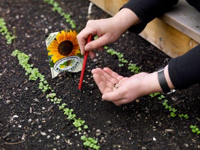 Ziehen Sie je nach Gemüse- oder Kräuterart jetzt schon Pflanzen vor, damit nach den letzten Frösten gleich gepflanzt werden kann (Bildquelle: Natur im Garten / Alexander Haiden)