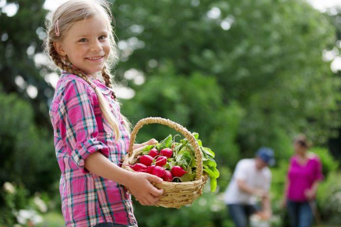 Radieschen schmackhafter Alleskönner - Natur im Garten