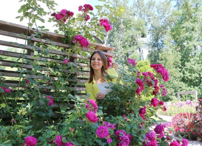 Auf der GARTEN TULLN blühen die Rosen