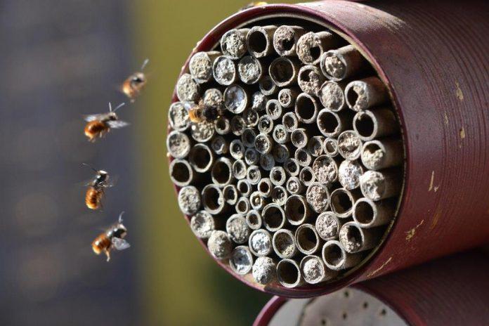 Jetzt im Winter ist die ideale Zeit, um Wildbienen und anderen Nützlingen ein Heim für die kommende Gartensaison vorzubereiten (Bildquelle: Natur im Garten / Kropf)