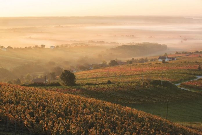 Herbststimmung in der Weinidylle