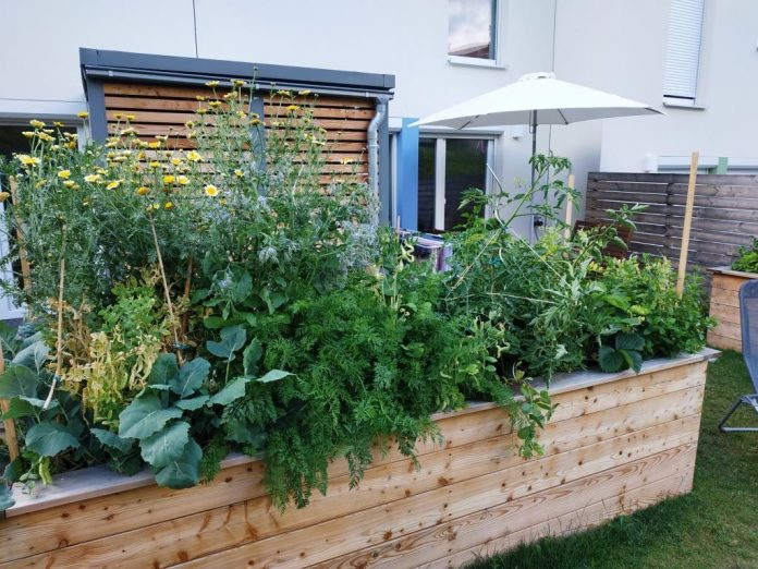 Hochbeete liegen voll im Trend – egal, ob im Garten, auf der Terrasse, oder auf dem Balkon
