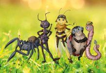 N.Explorers - Die Big Five der Gartensafari